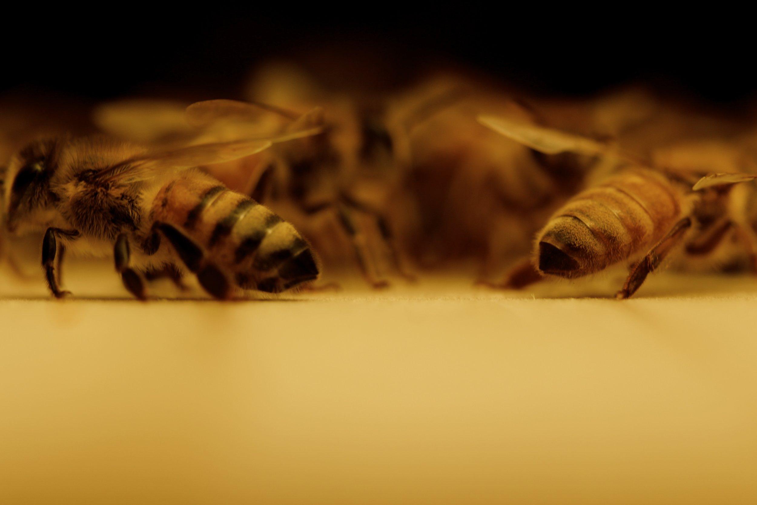 Micro Lens Symmetrical Bees.jpg