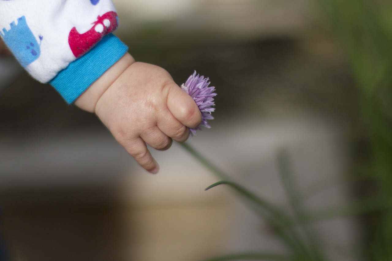 Picking chive flowers.