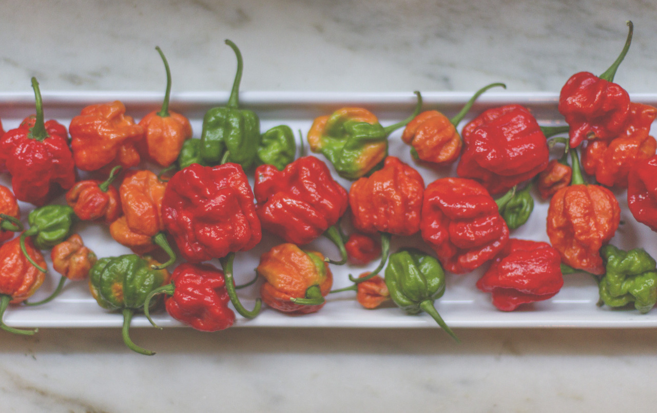 The last batch of moruga scorpion peppers.