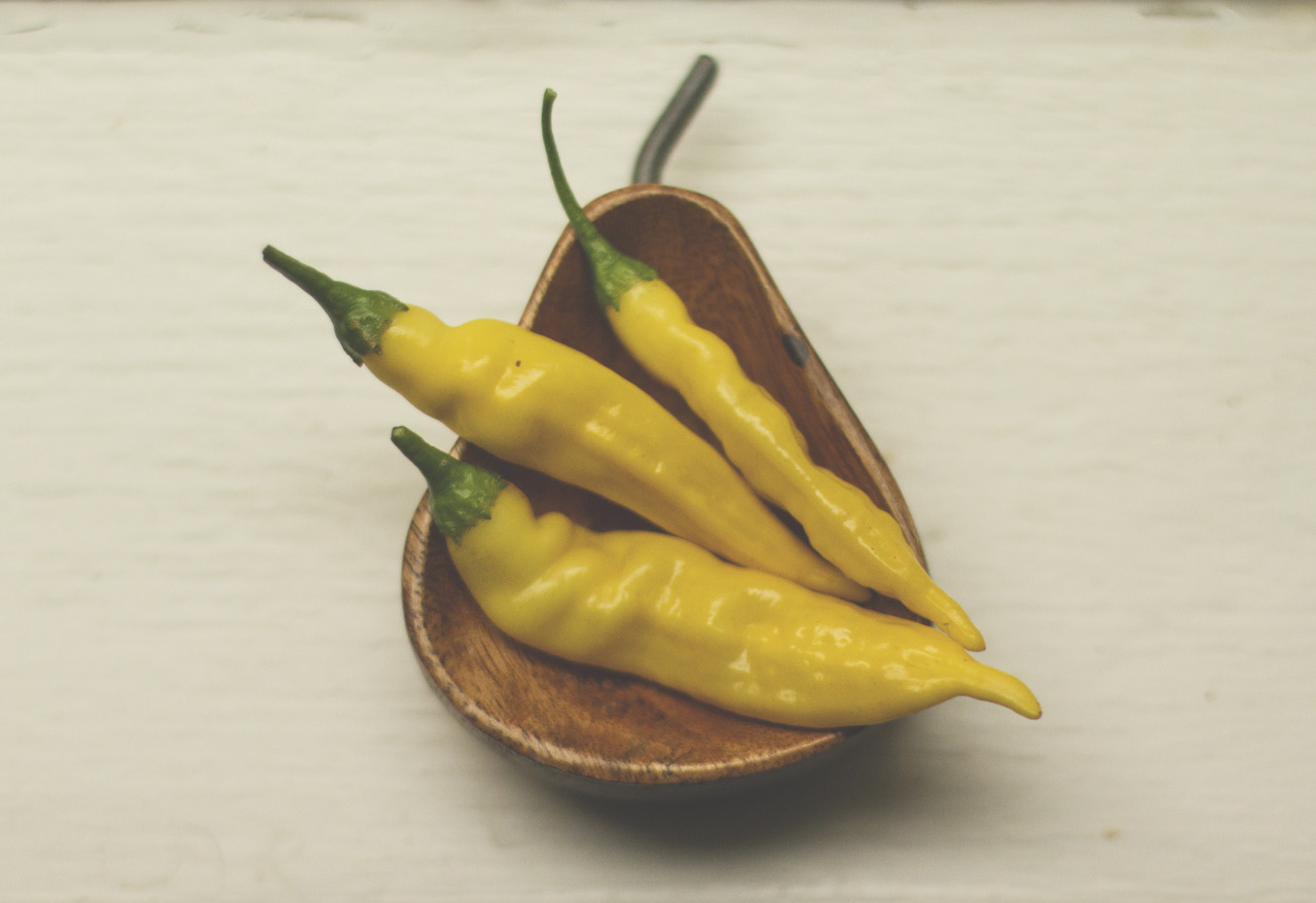 @ peonyandbee  - They're much spicier than jalapenos, but they have a really nice sweet taste to them.