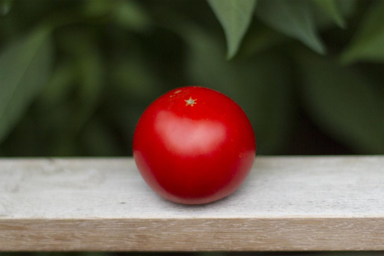 First tomato of the season!
