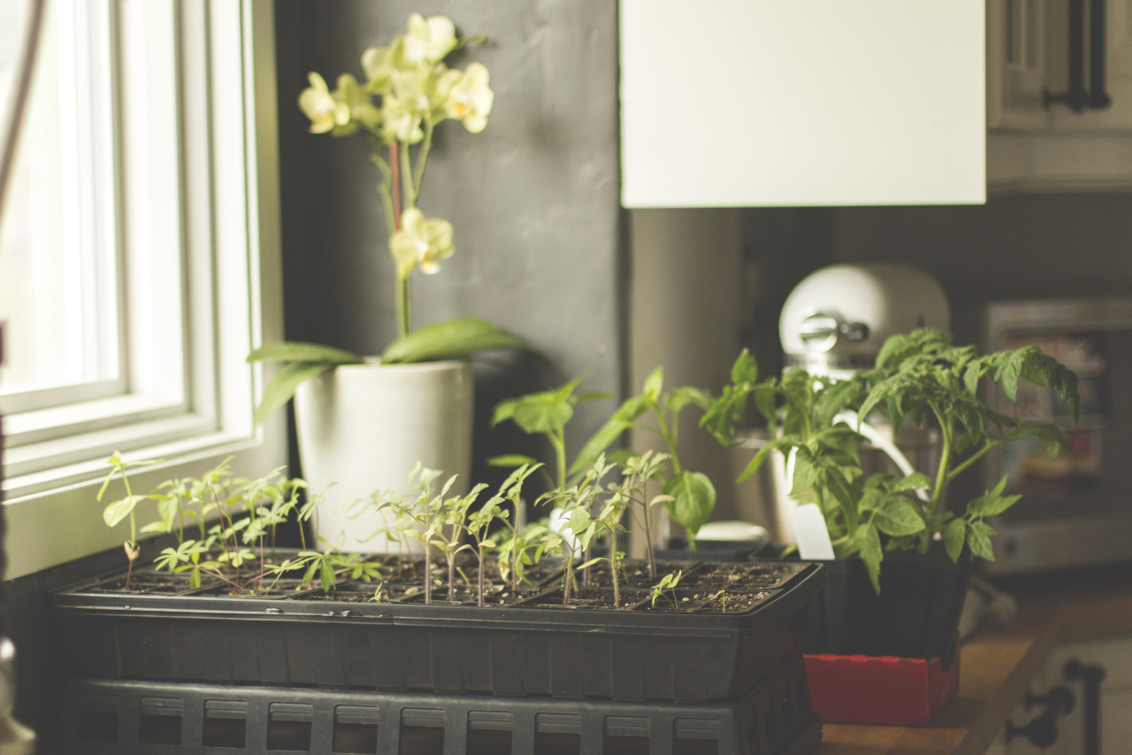 The kitchen garden is growing. One week to go.