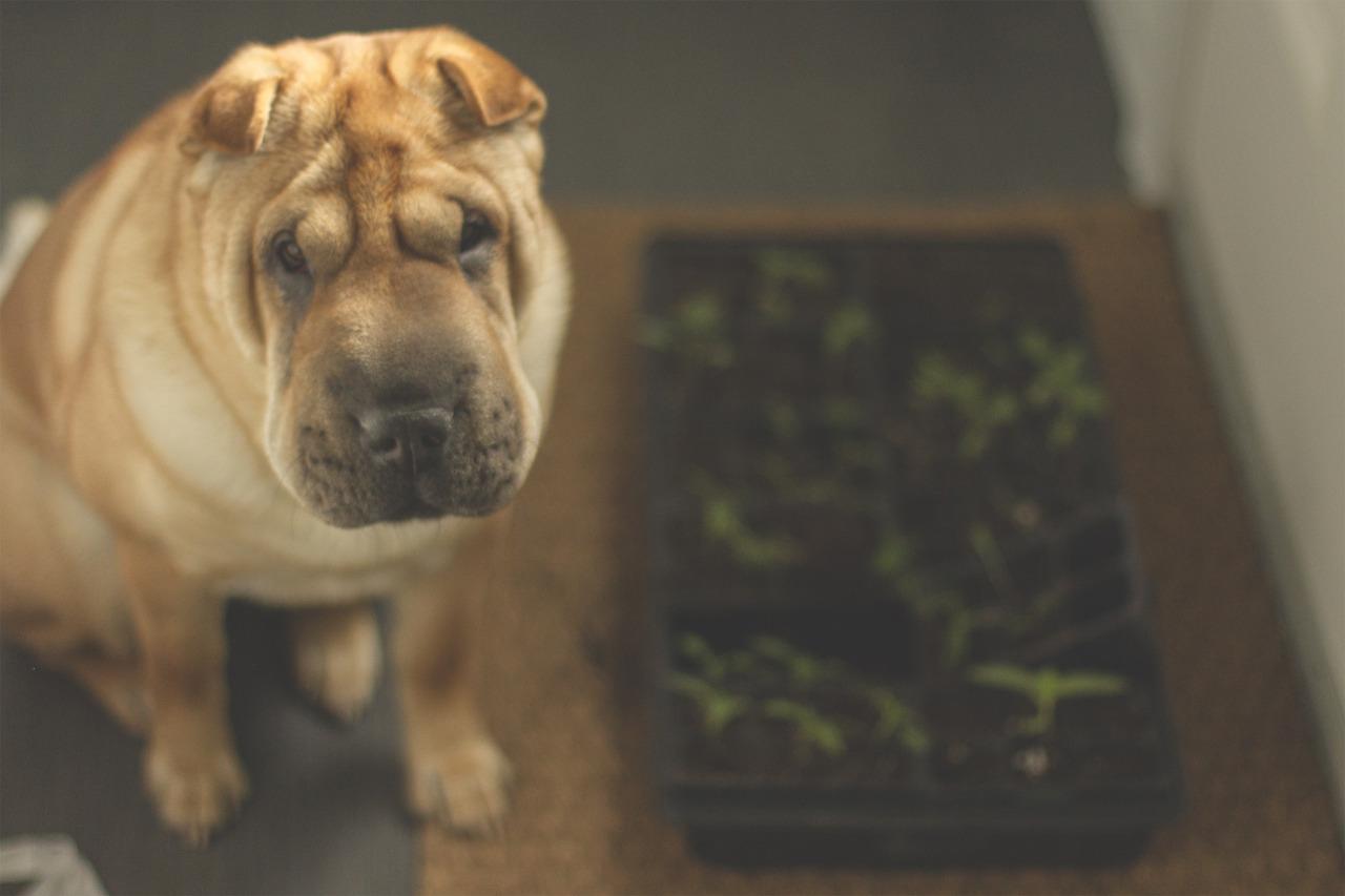 Sad dog and seedlings.