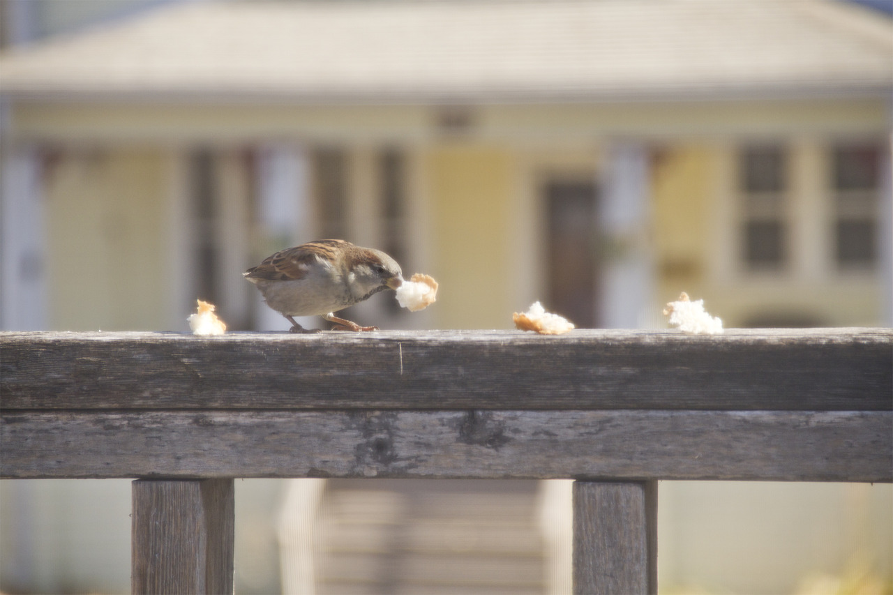 I've been luring birds onto my balcony with pieces of rye bread…they seem confused.