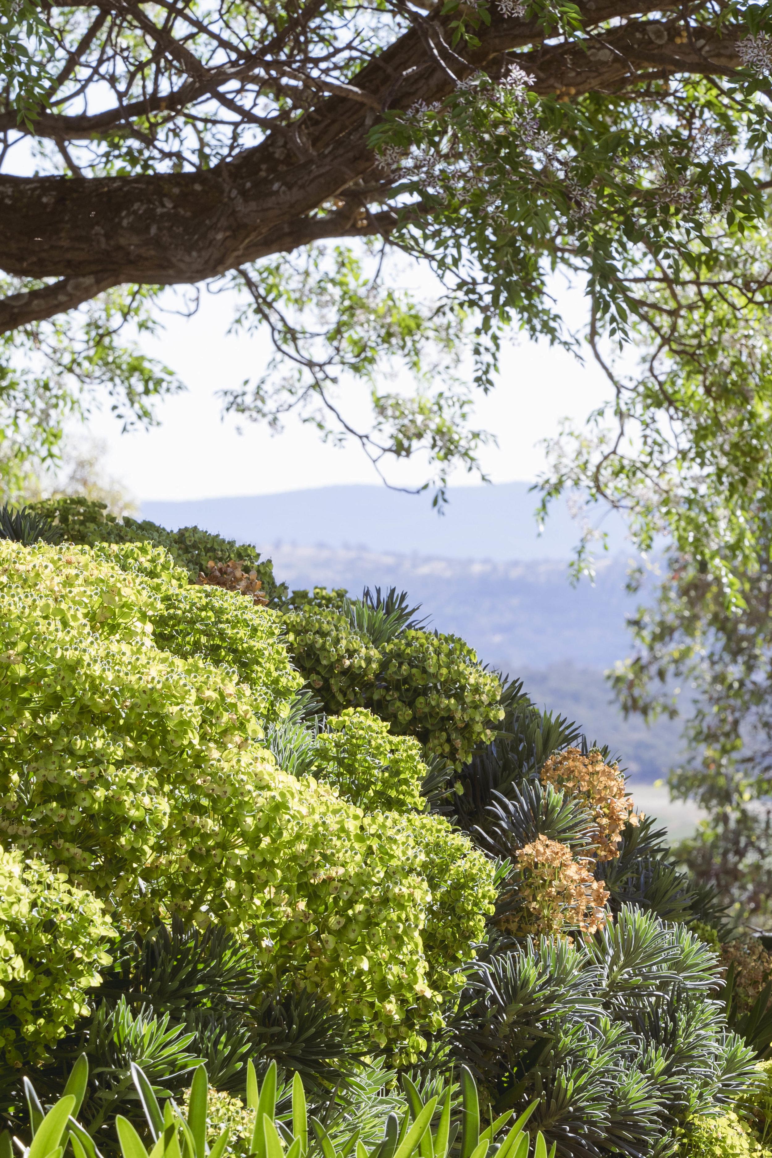 Somewhere Landscape Architects_GARDEN #3 (4)