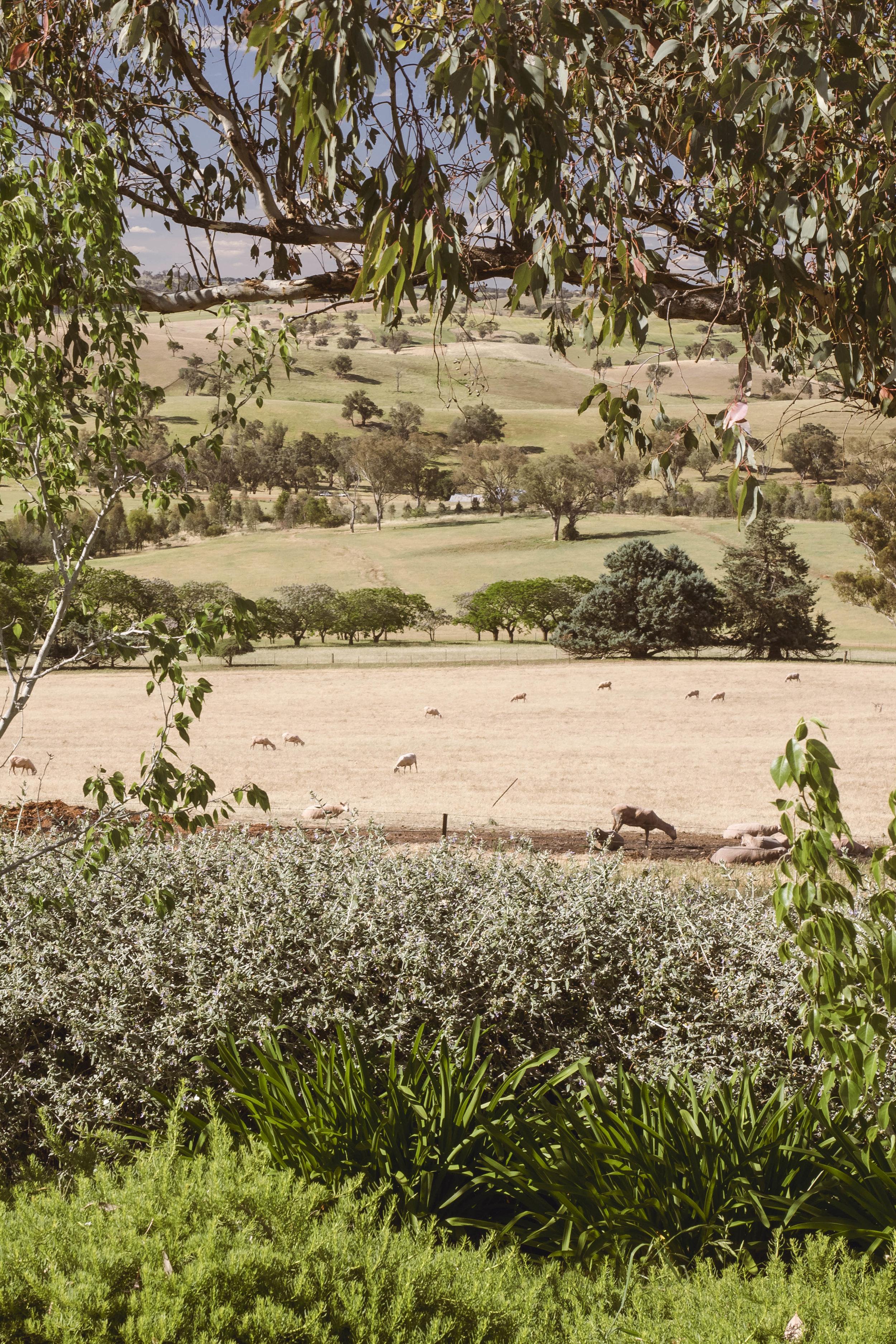 Somewhere Landscape Architects_GARDEN #3 (9)