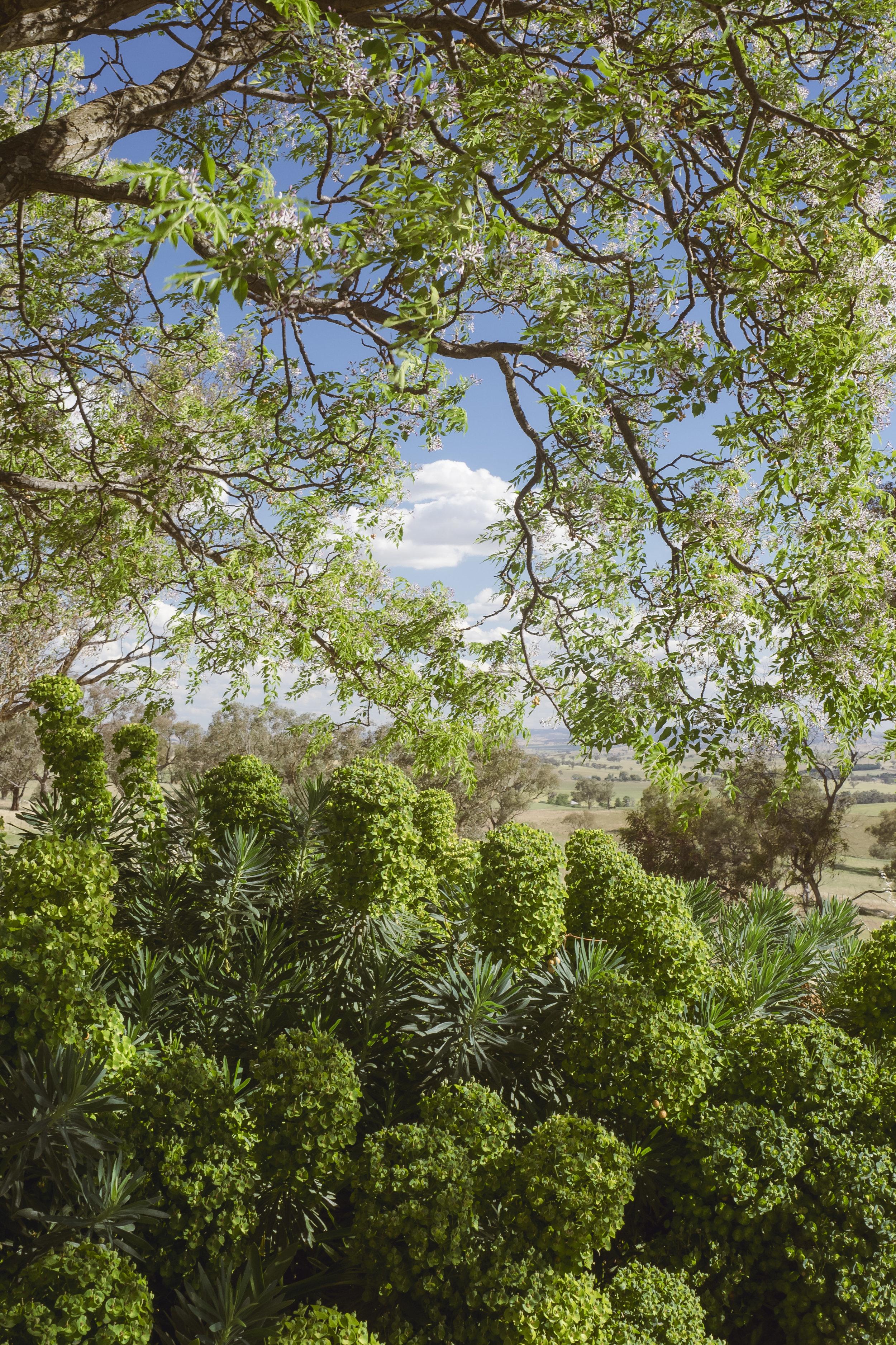 Somewhere Landscape Architects_GARDEN #3 (6)