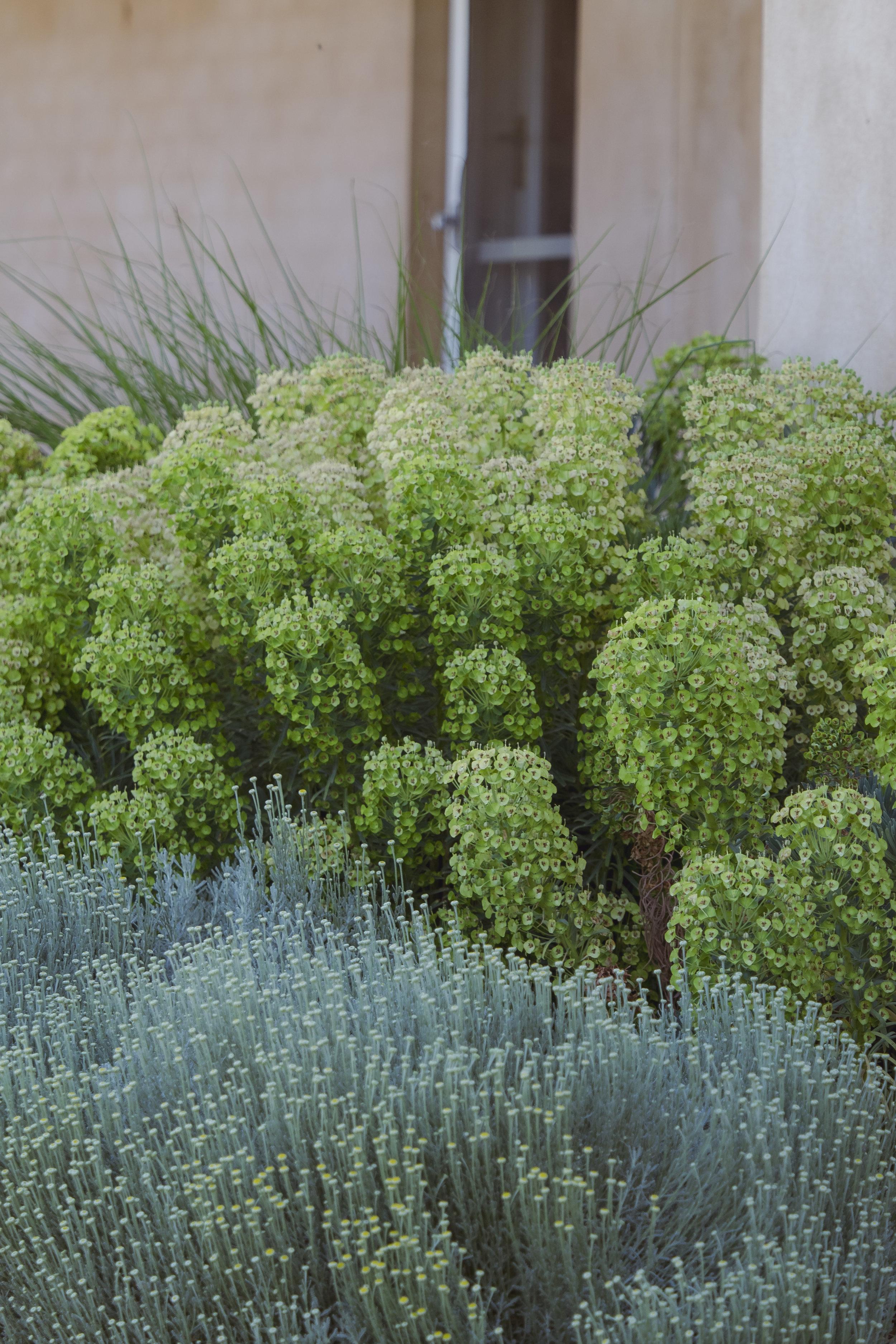 Somewhere Landscape Architects_GARDEN #3 (11)