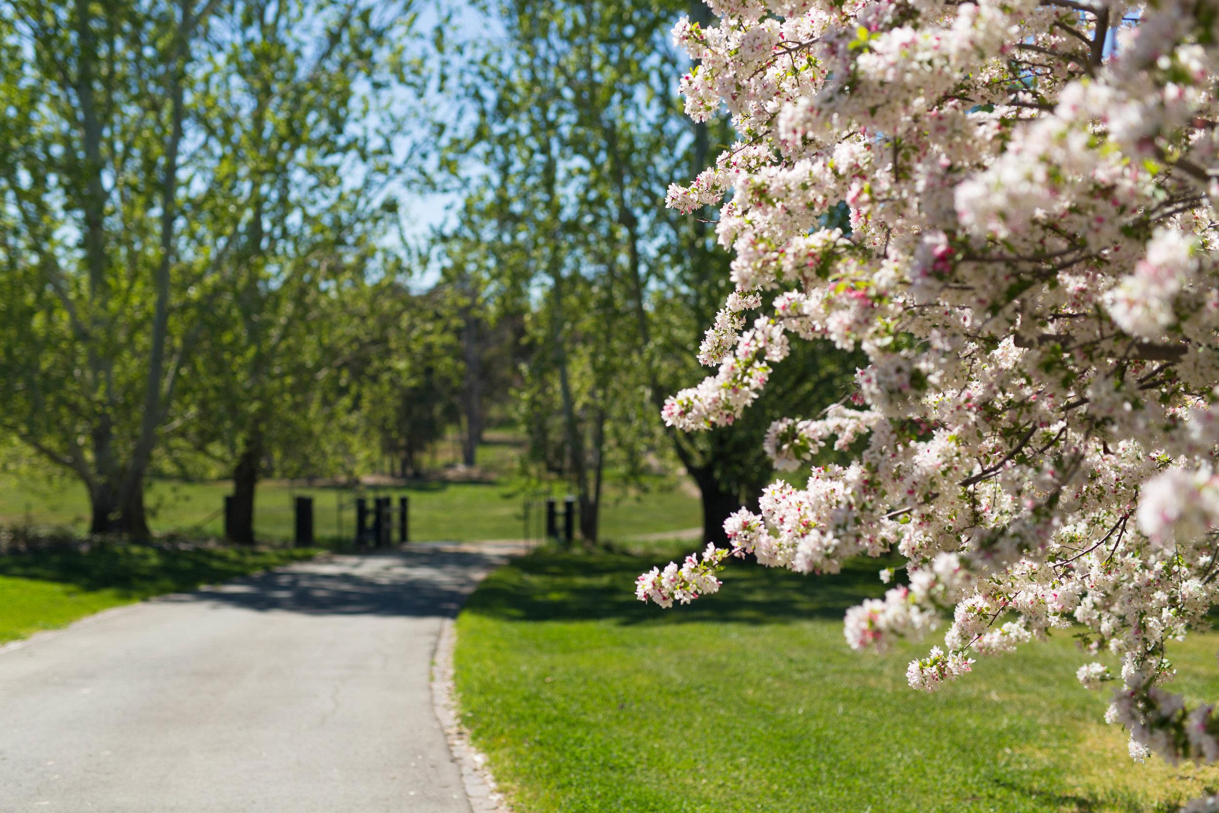 Somewhere Landscape Architects_GARDEN #10 (5).jpg