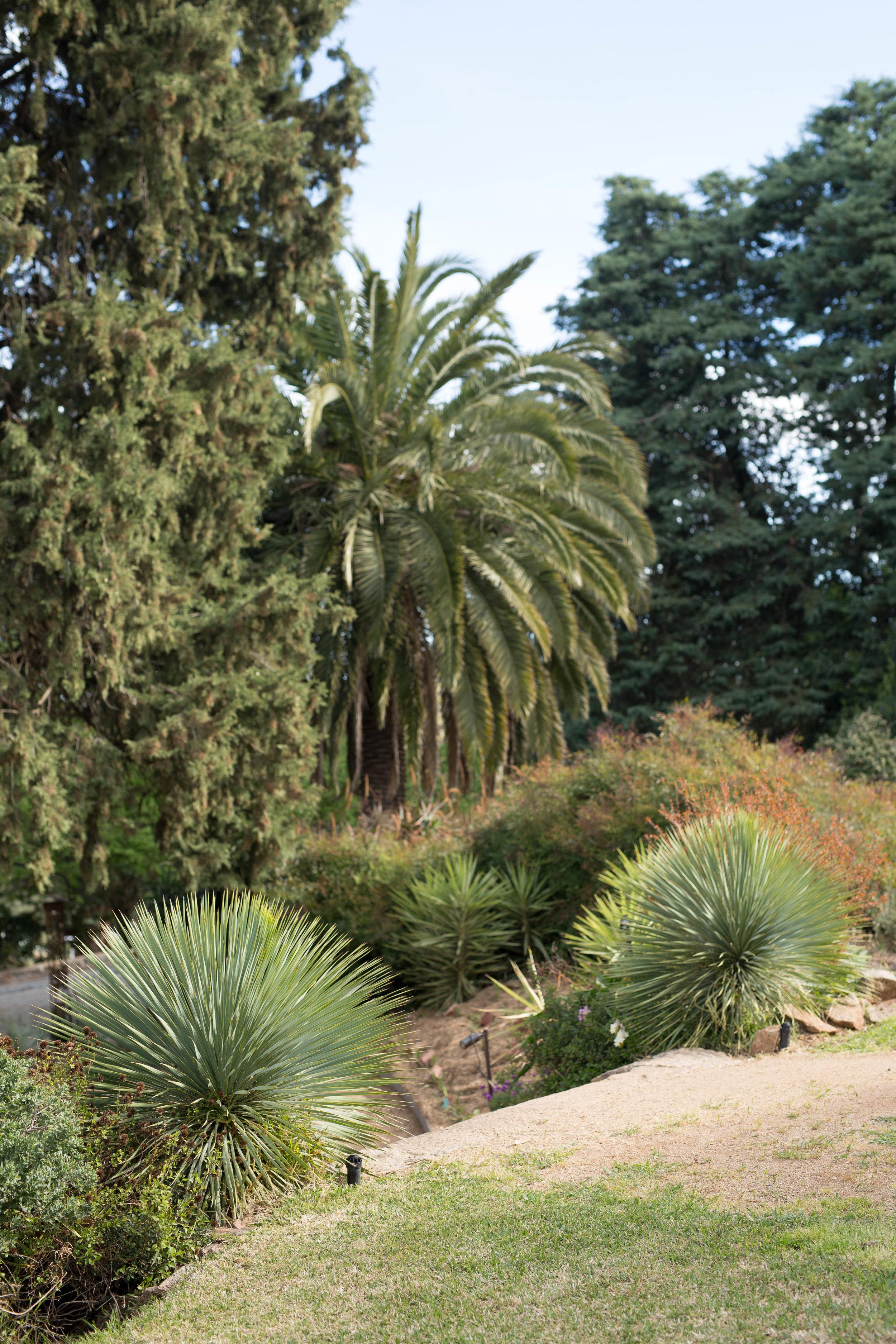 Somewhere Landscape Architects_GARDEN #11 (6).jpg