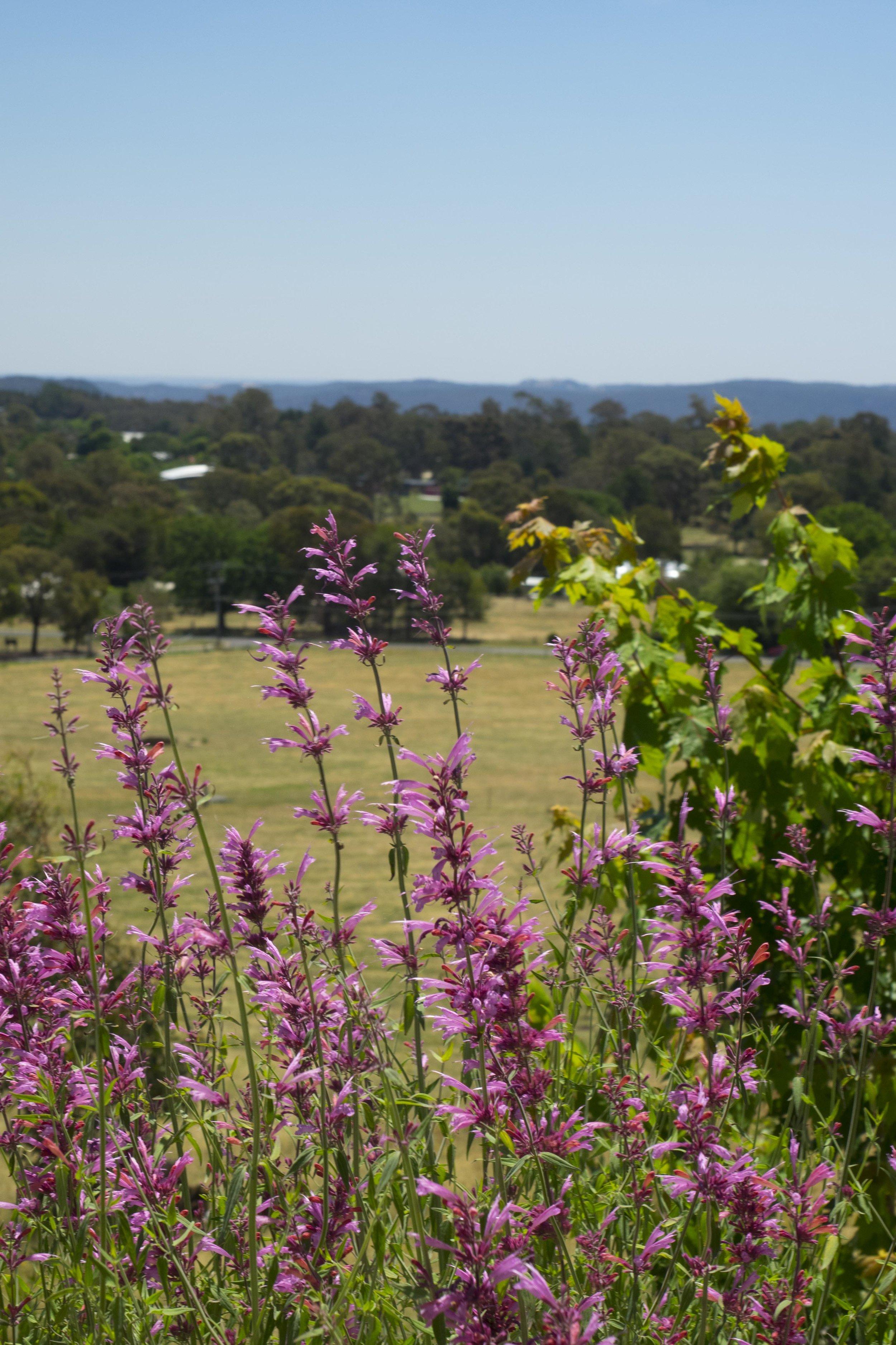 Somewhere Landscape Architect_Garden #12 (3).jpg