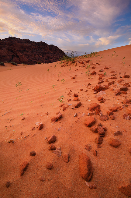 The Secret Lives of Dunes - Sand Dunes, Snow Canyon State Park, UT