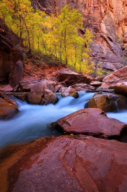 November Run - Virgin River, Zion National Park, UT