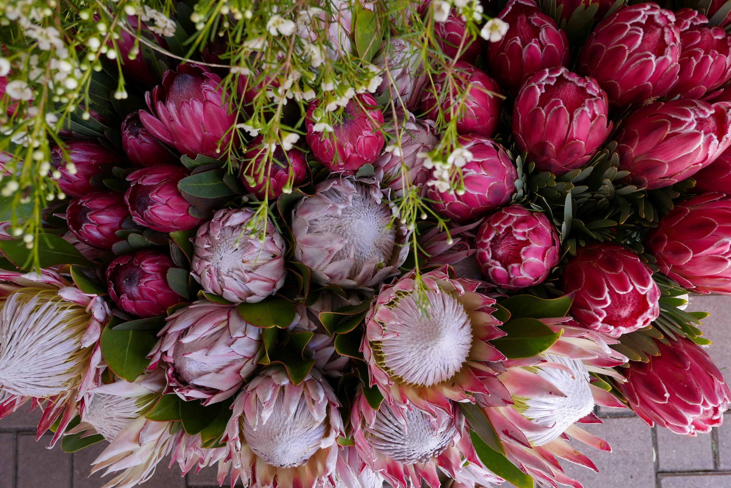 If you've seen my wedding stationary, you know how much I love proteas.