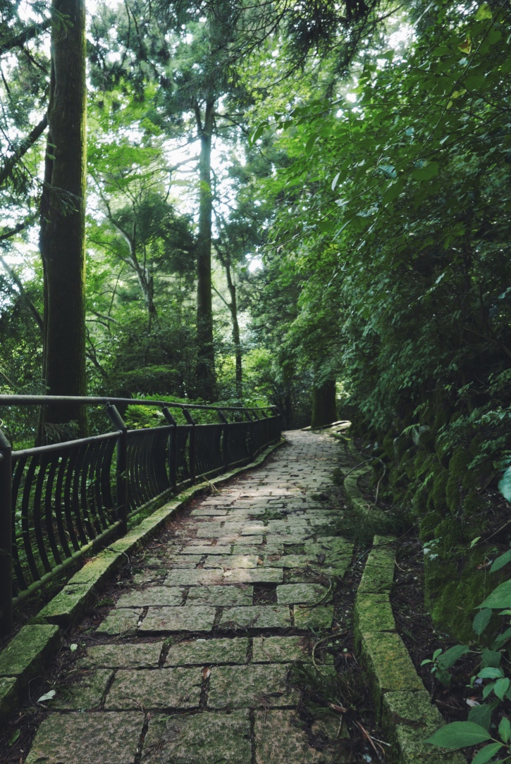 The moss-covered path to the Hakone-Jinja Shrine.