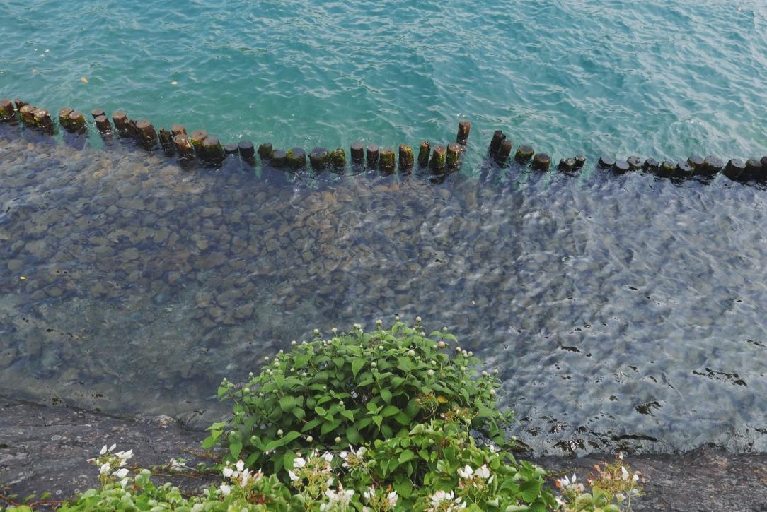 The rocky shoreline.