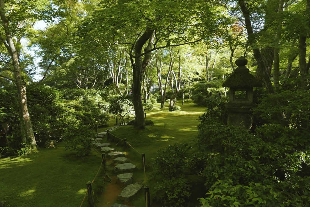 The moss-covered grounds at Okochi-Sanso.