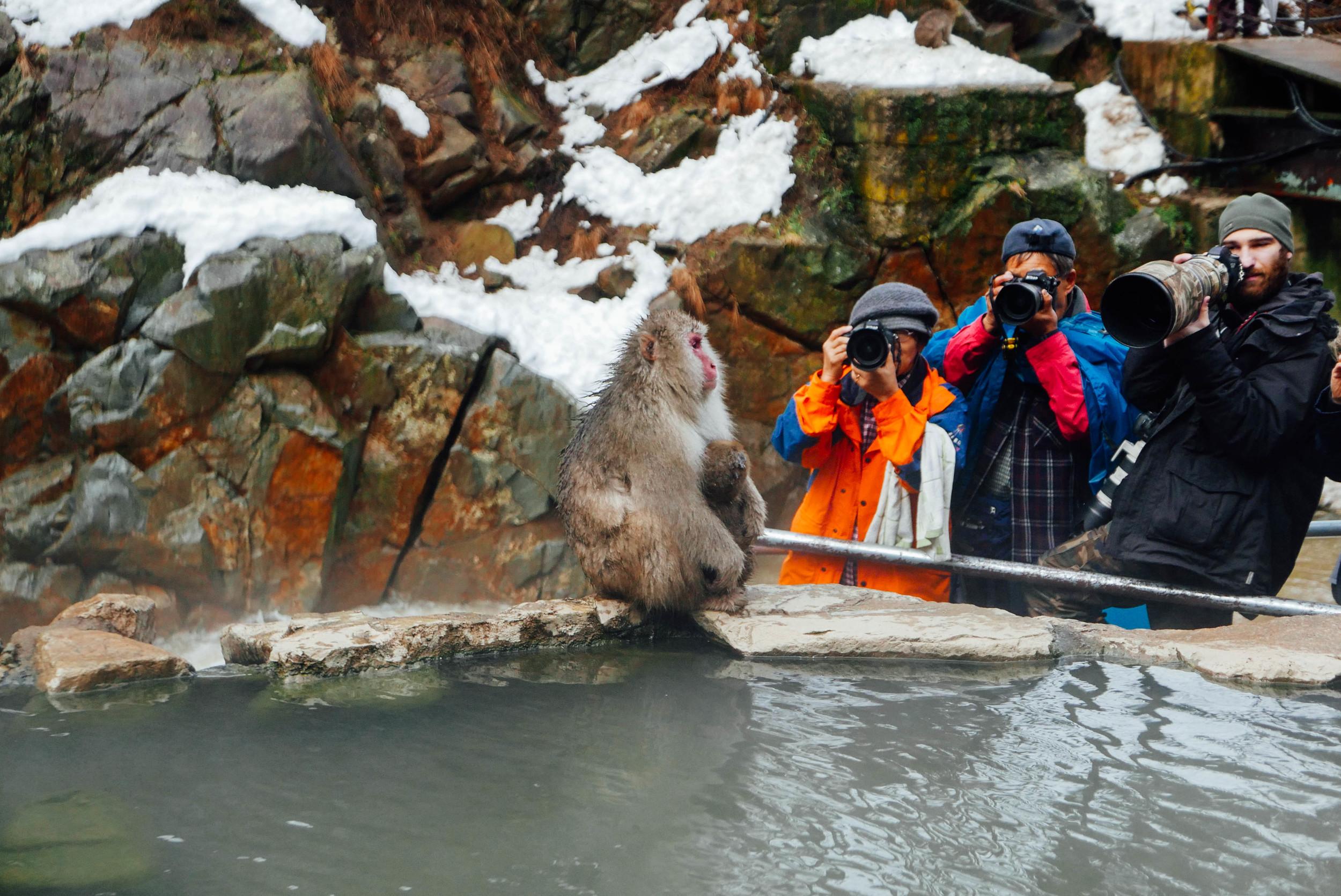 snow-monkey-park-photographers.jpg