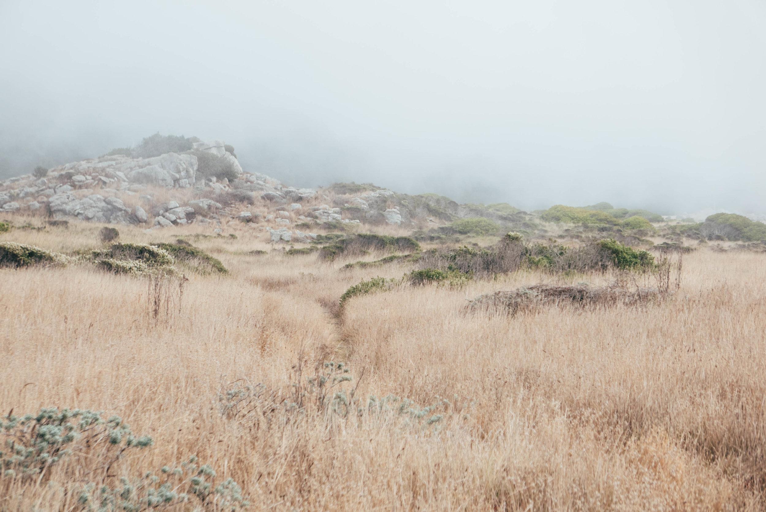 Salt Point State Park-61.jpg