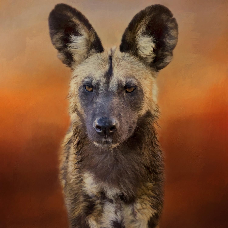 AFRICAN WILD DOG>