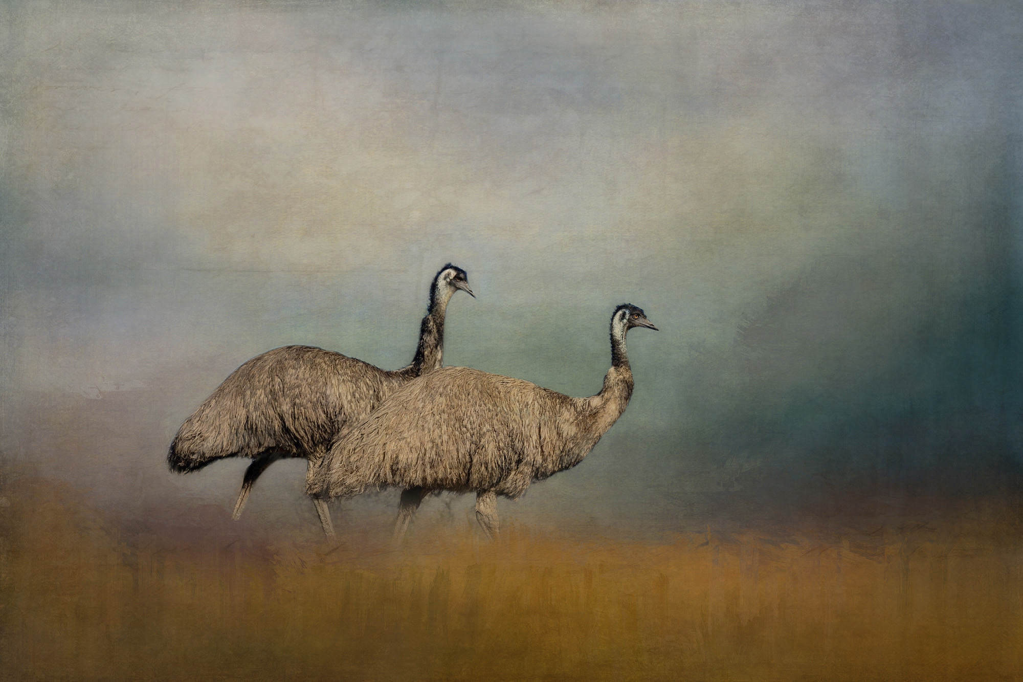 MR & MRS EMU.