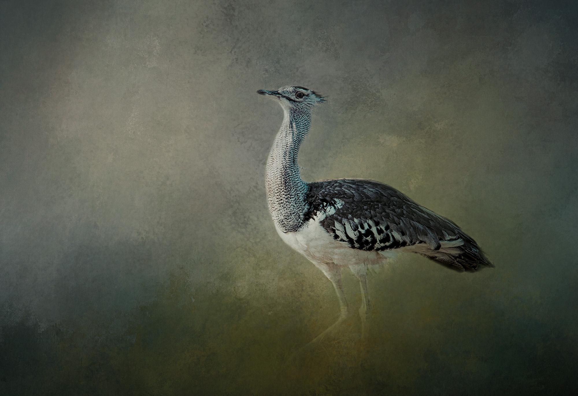 KORI BUSTARD BIRD.