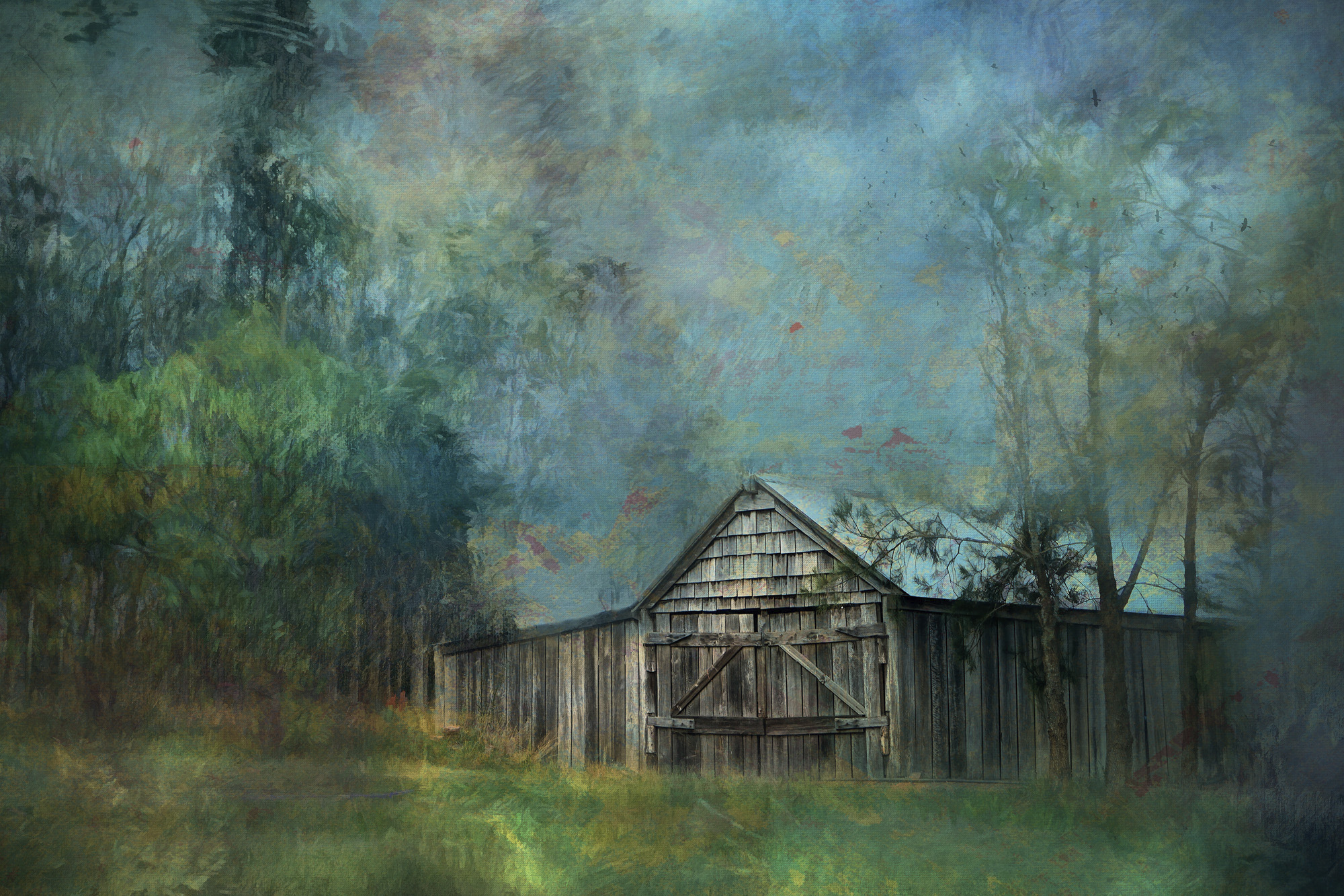 OLD SHED....HUNTER VALLEY N.S.W.