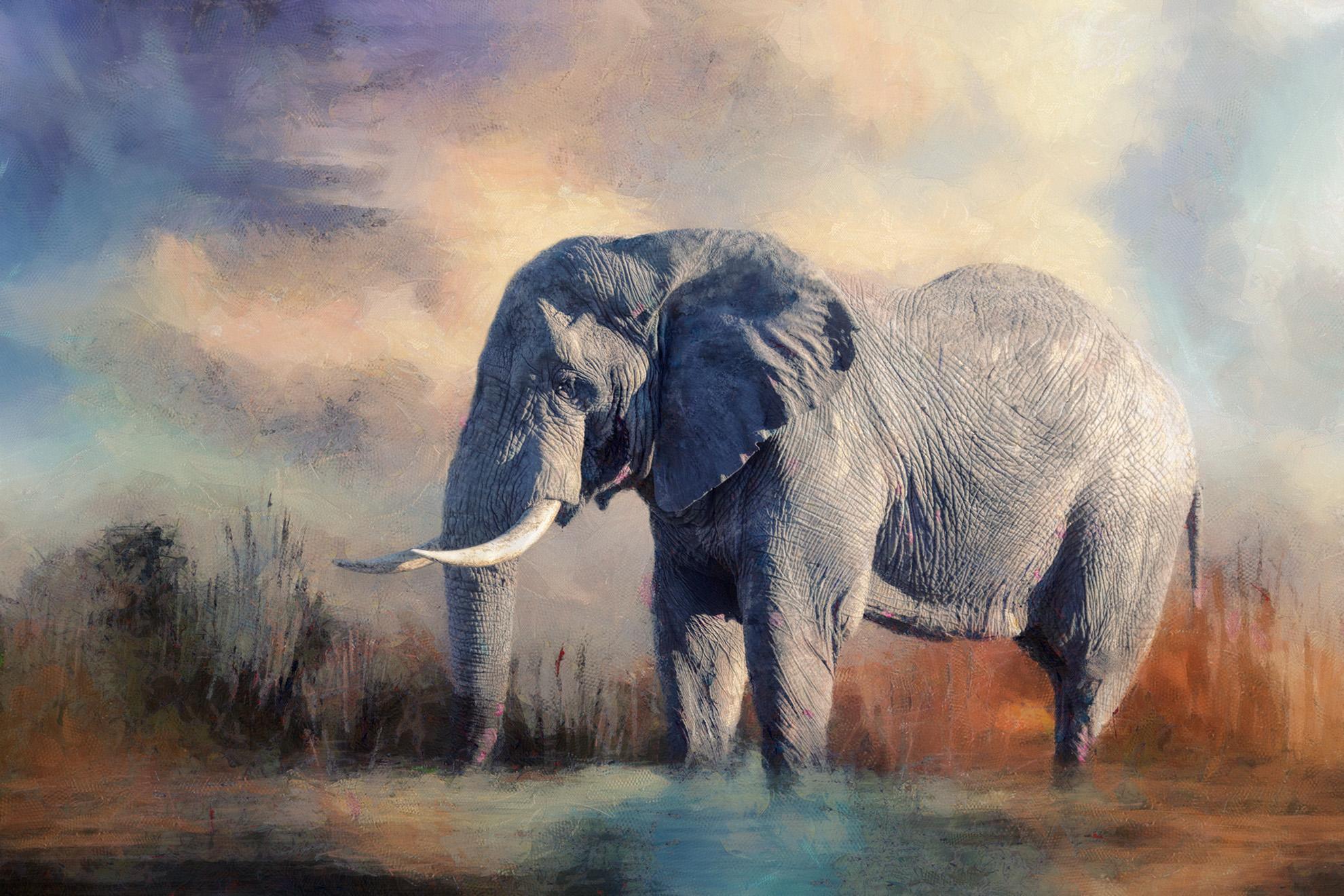 ELEPHANT....MAJESTIC ANIMAL.