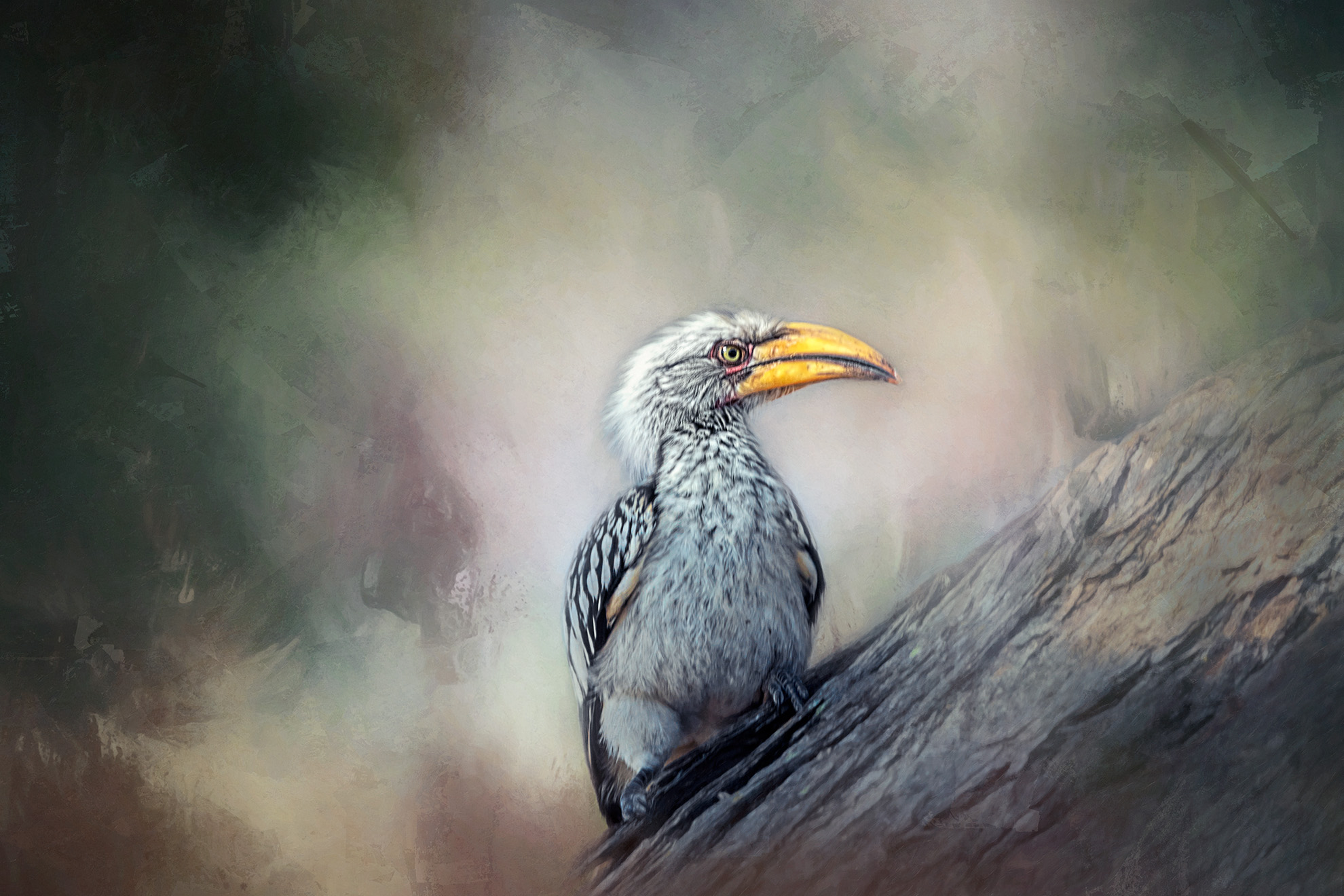 SOUTHERN YELLOW- BILLED HORNBILL.