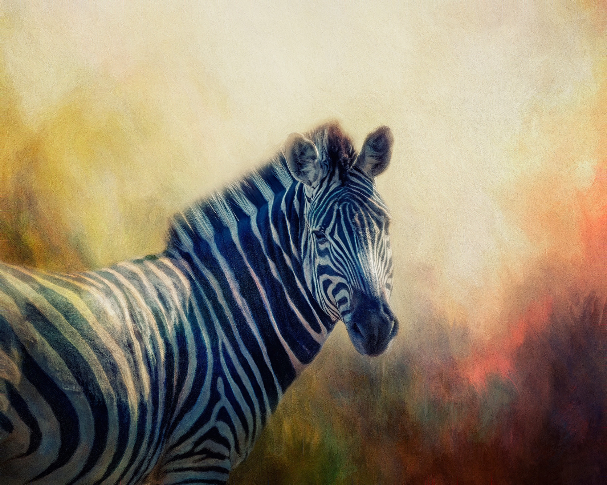 Each individual Zebra is unique.