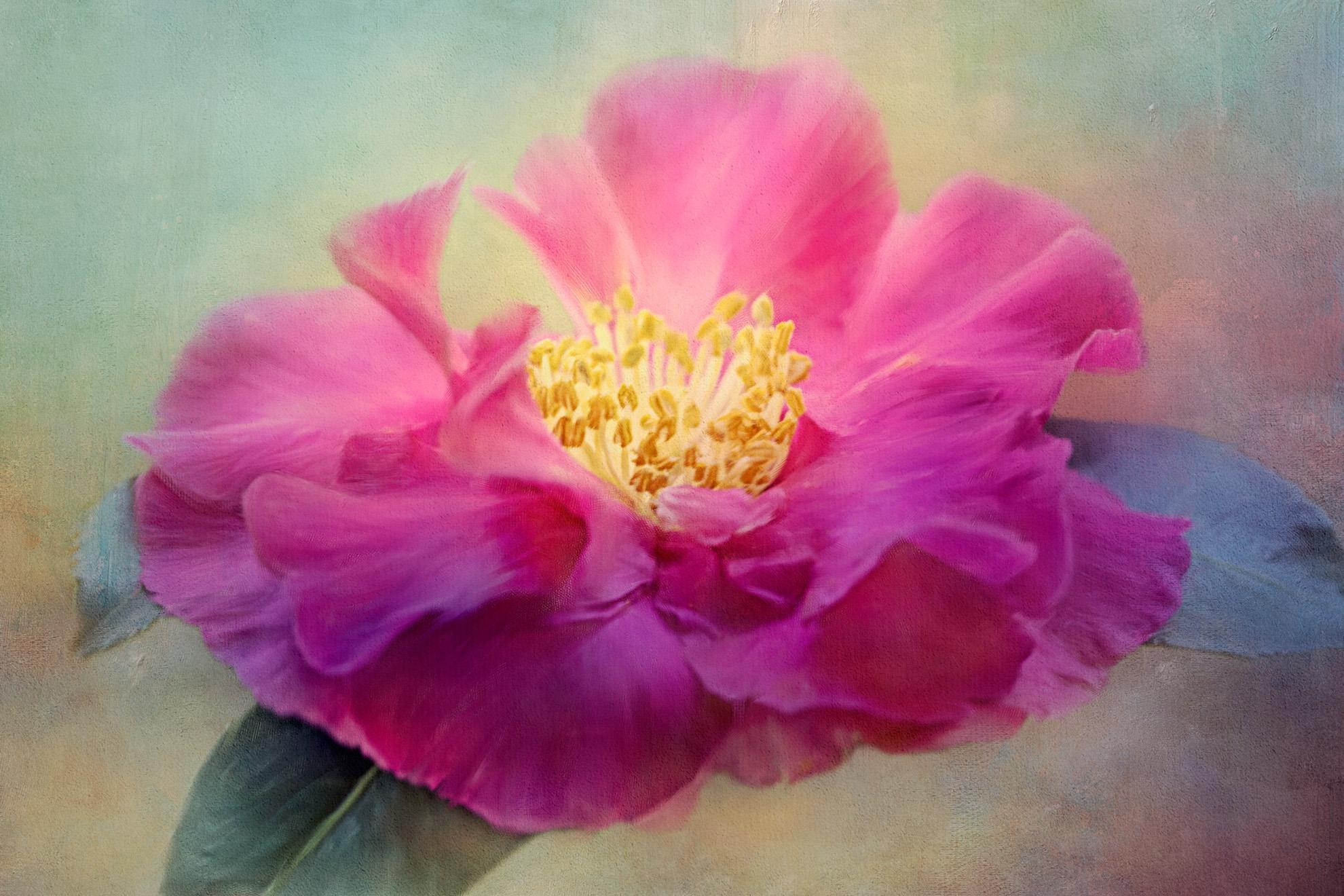 Camellia sasanqua.