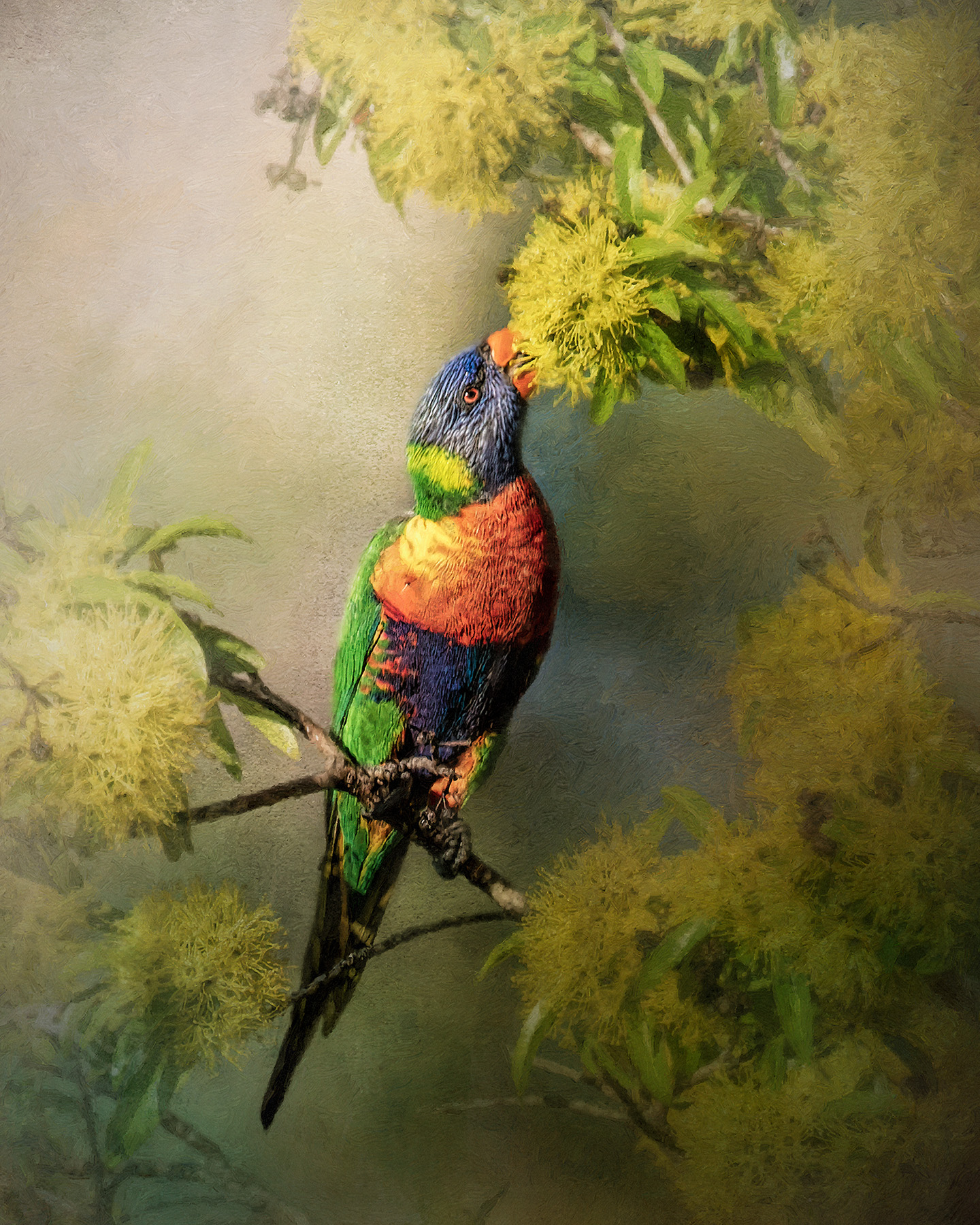 Lorikeet....I can reach it!