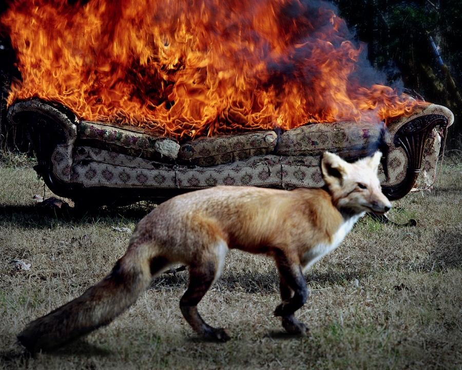 Fire Behavior - The Oxford American