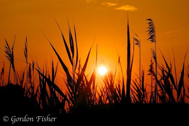 Burton's Island Sunrise