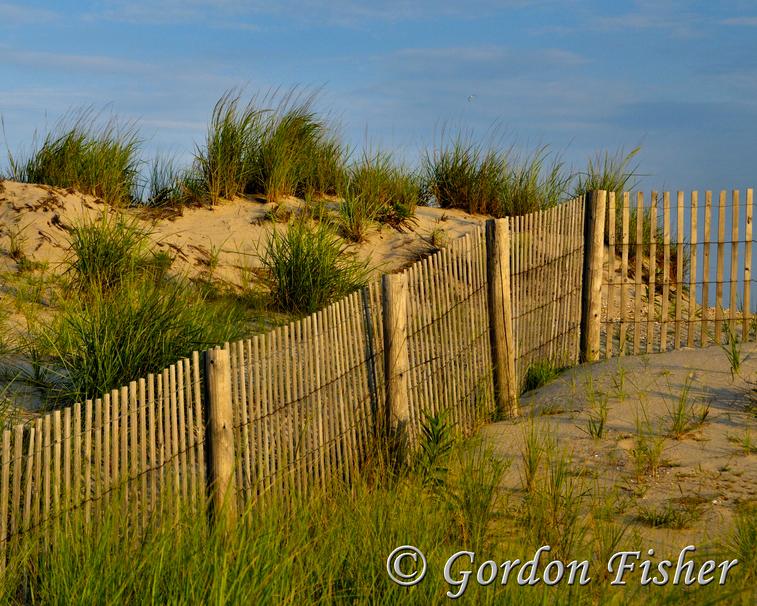 Delaware Dunes