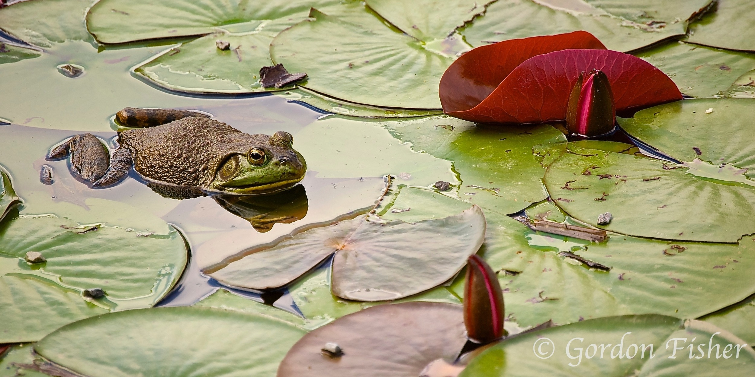 Lily Pad Loafer