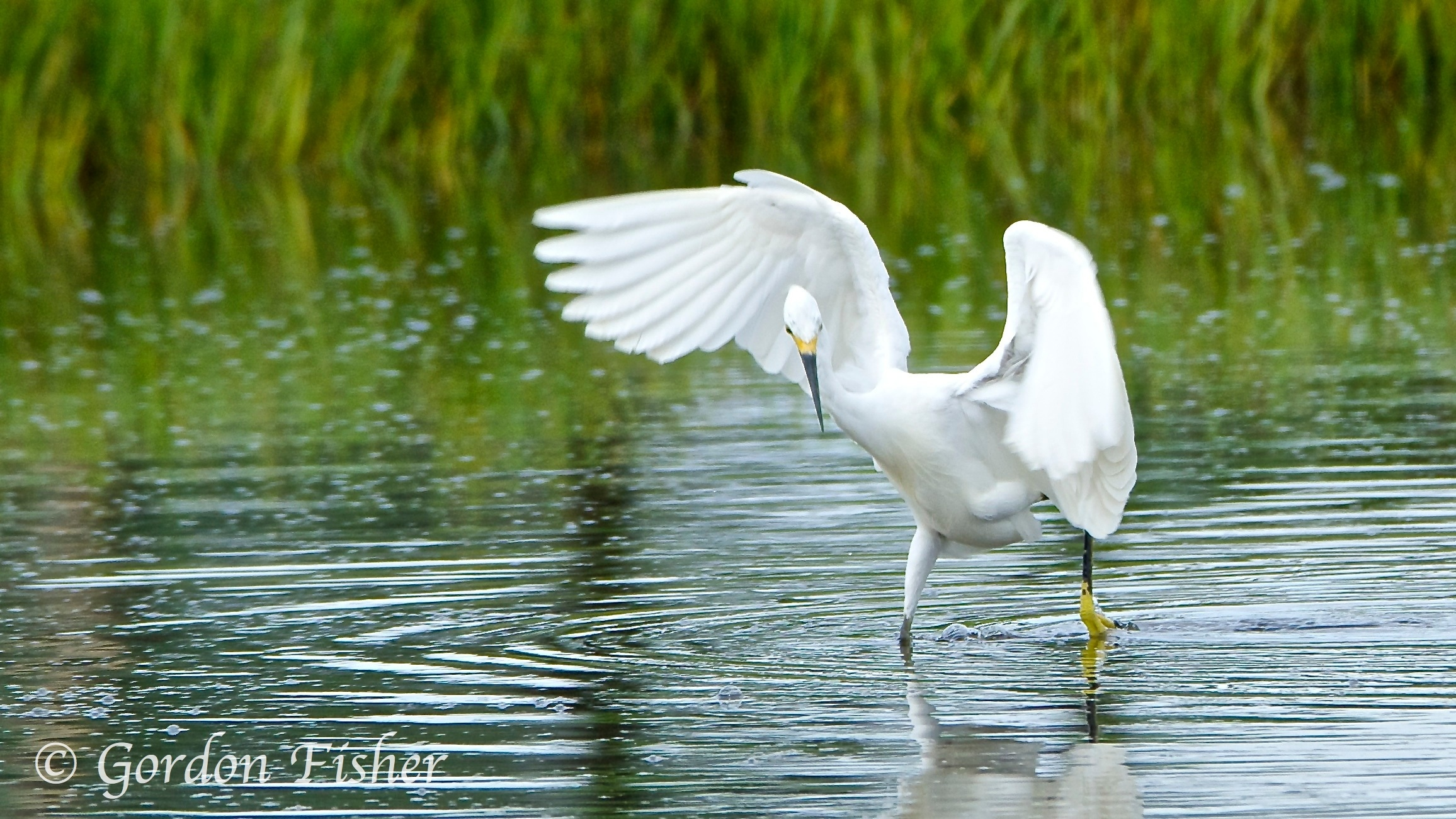 Dance of the Egret