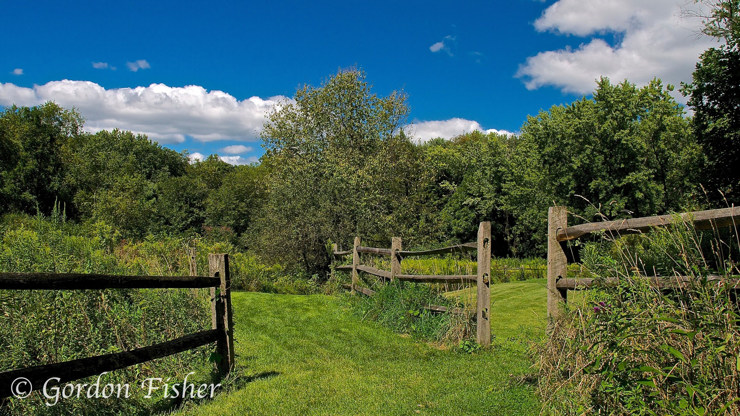 Blue Sky Over Beechwood