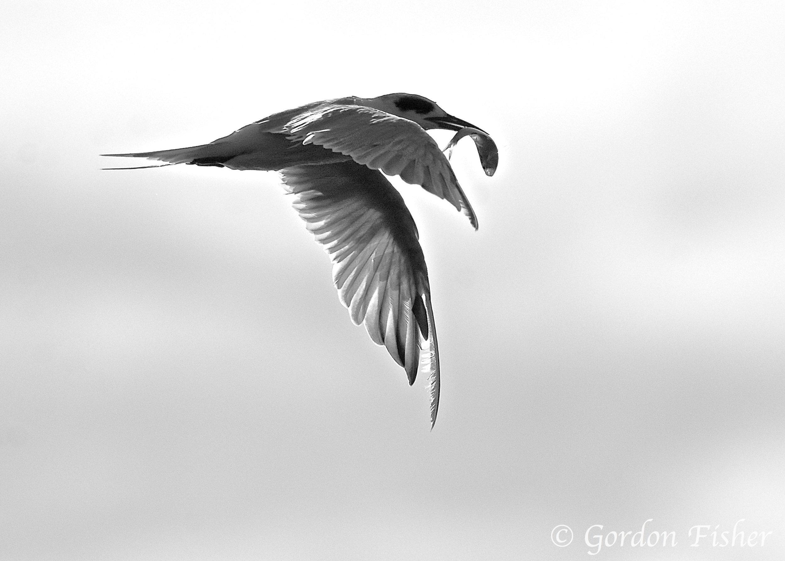 Tern Take Out