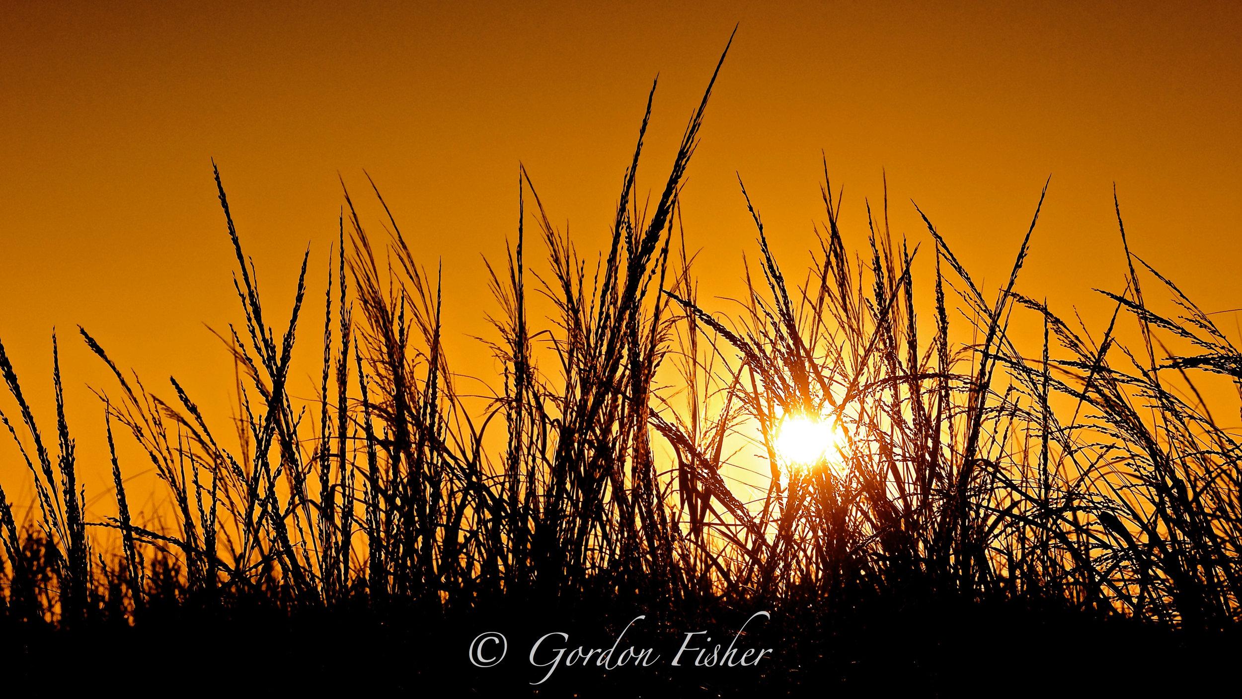 Sea Grass at Sunup
