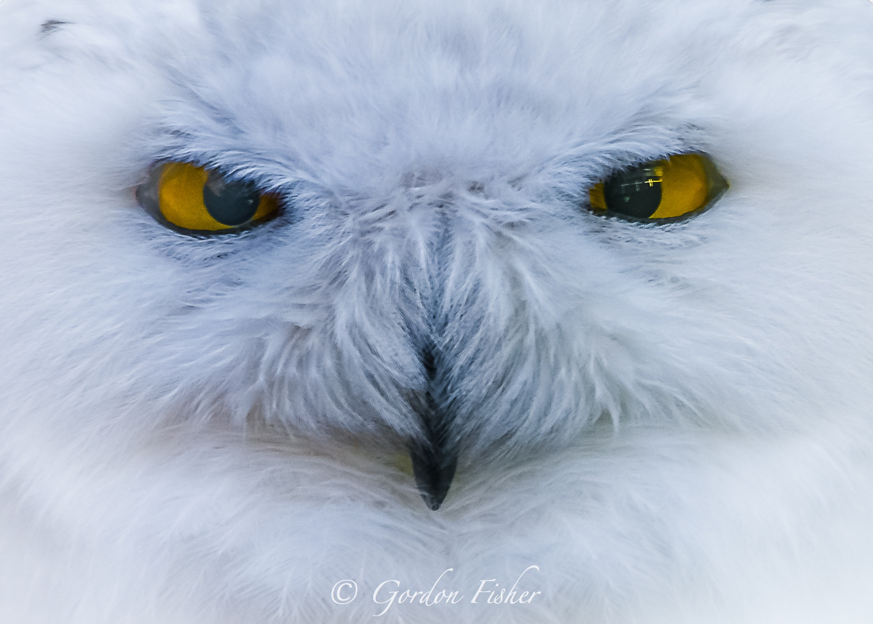 Sinister Snowy Stare