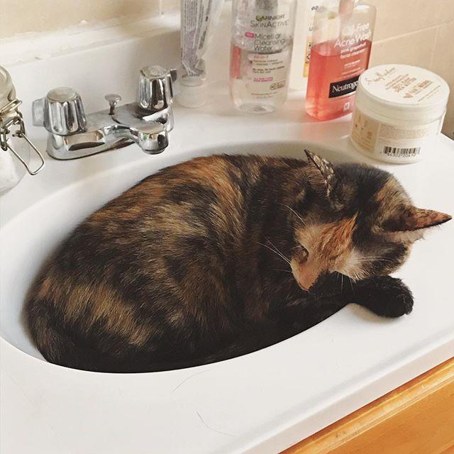 She's baby. 😻 . . . #catstagram #catsofinstagram #tortiesofinstagram #tortietude #niececat #sleepy #cute