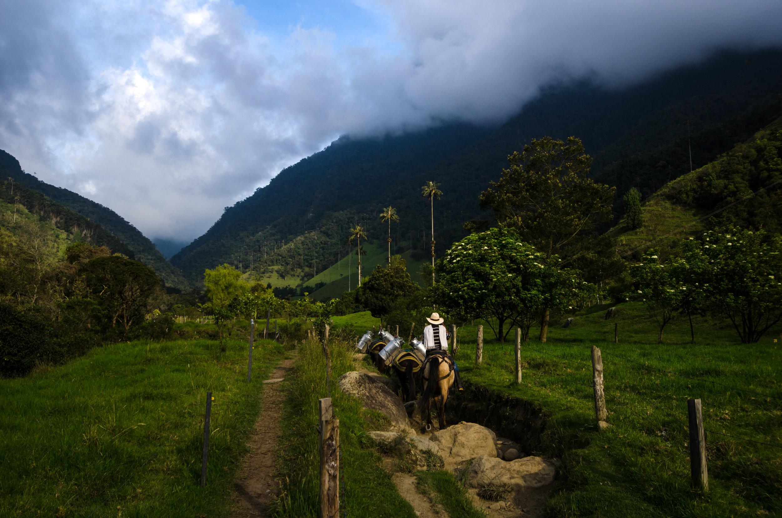 Valle de Cocora, Colombia:  Print  //  Framed Prints  //  Canvas Prints