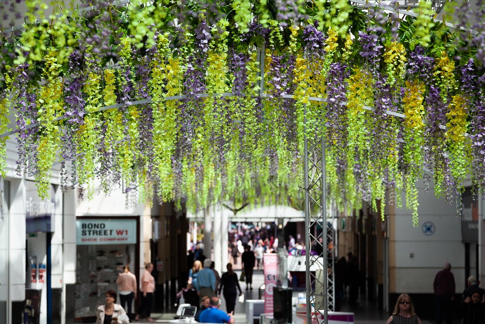 Wisteria Walk_03 06 2019_16_©Matthew Nichol Photography.jpg
