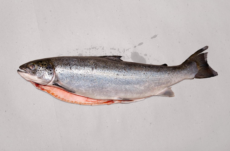 Sixty dollars worth of Salmon