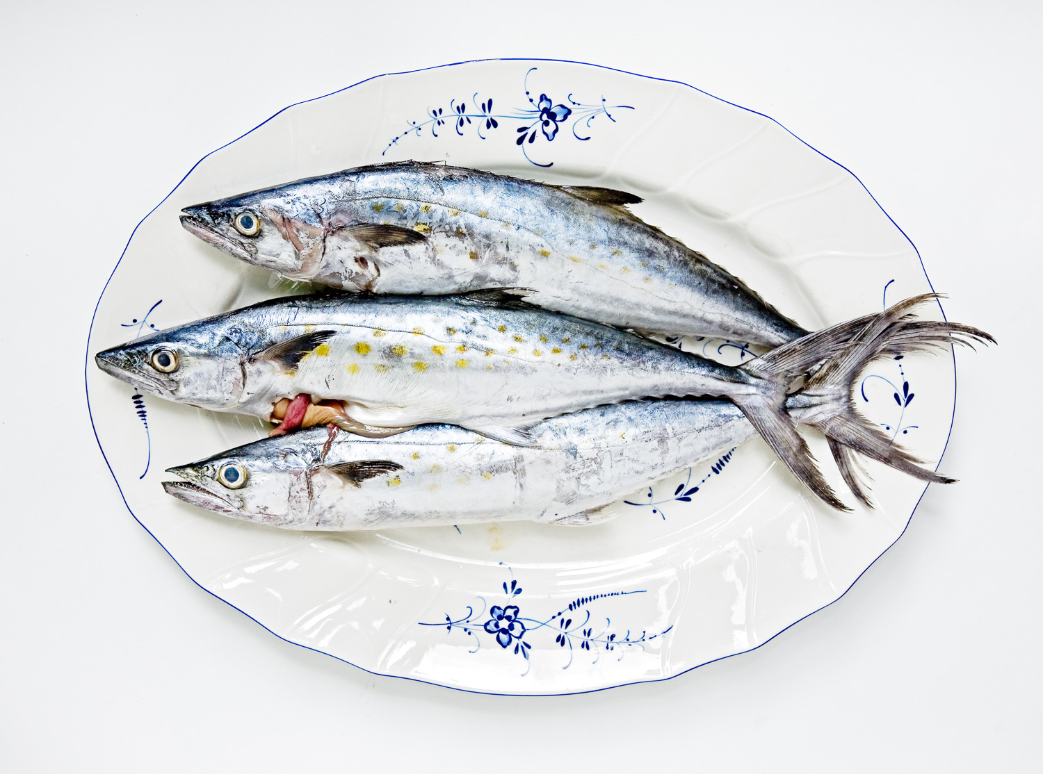 Three Spanish Mackerel arranged together for the photograph like this.