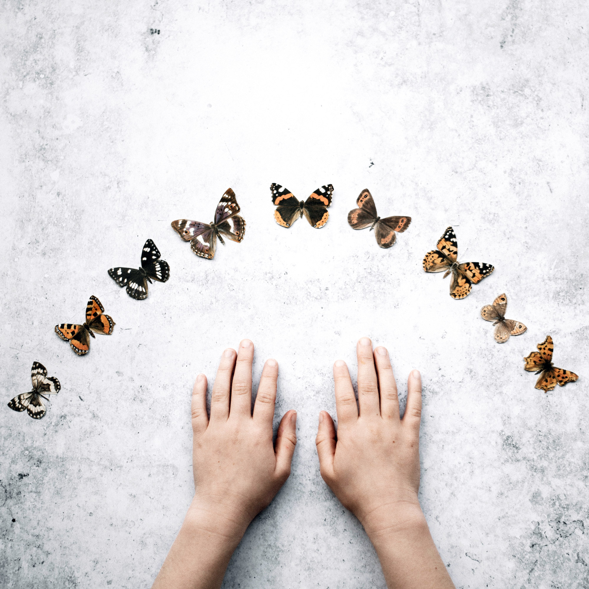 From egg, to caterpillar, to pupa, to butterfly. There should be a beautiful transformation!