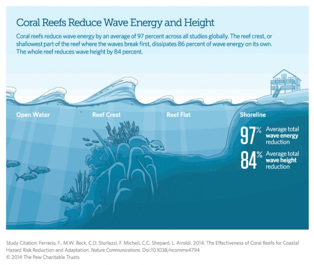 Healthy reefs offer unparalleled protection for coastal residents and properties. A study by The Nature Conservancy found that the median cost of building artificial wave defenses is $19,791 per meter vs. $1,290 for coral reef restoration. Photo credit: The Nature Conservancy