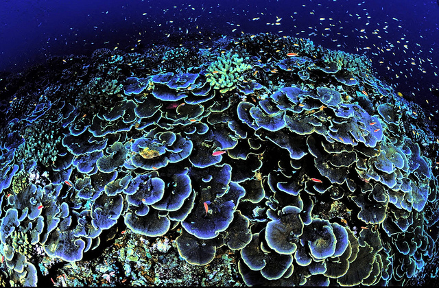 A healthy reef in Jarvis Island National Wildlife Refuge. Photo Credit: US Fish and Wildlife Service