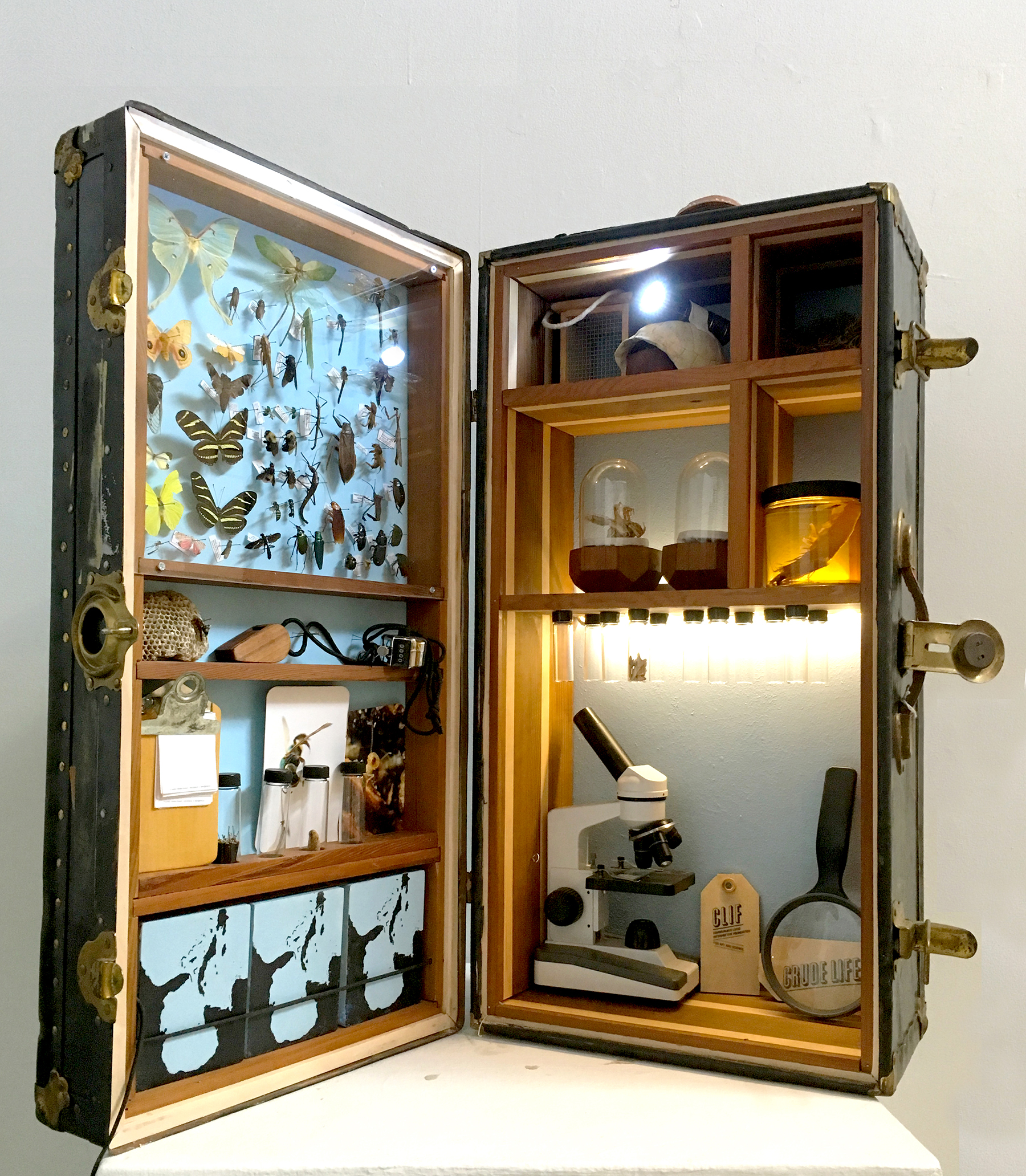 Crude Life Portable Biodiversity Museum for the Gulf of Mexico (Invertebrate Gallery), Sean Miller in collaboration with Brandon Ballengee , 2016